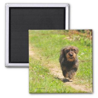 Running happy Dachshund Puppy Square Magnet