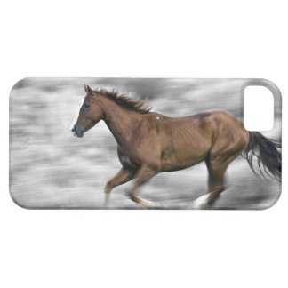 Running horse iPhone 5 cases