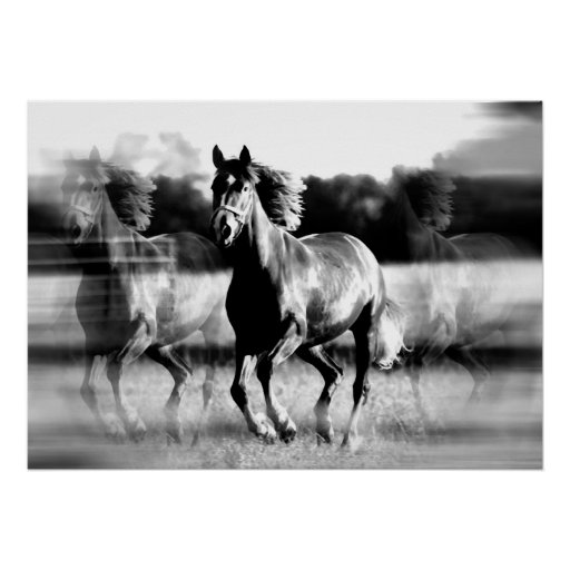 Running Horse Poster Print - B&W Horse Posters