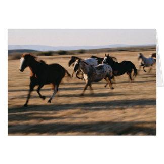 Running Horses Card