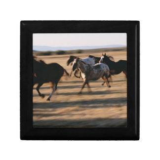 Running Horses Gift Box