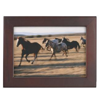 Running Horses Keepsake Box