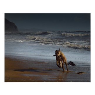 Running Lurcher on Beach Poster