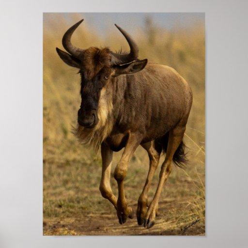 Running Wildebeest Poster