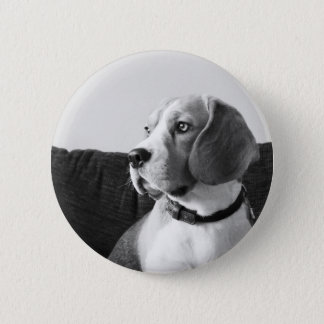 Rupert the Beagle Dog Badge