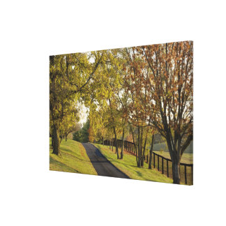 Rural road through Bluegrass region of Kentucky 2 Stretched Canvas Prints