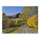Rural road through Bluegrass region of Kentucky Postcard