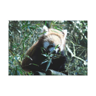 Russet-red panda canvas print