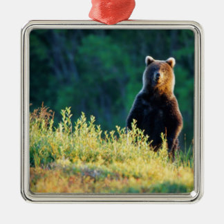 Russia, Kamchatka, grizzly of Kroska Christmas Ornament