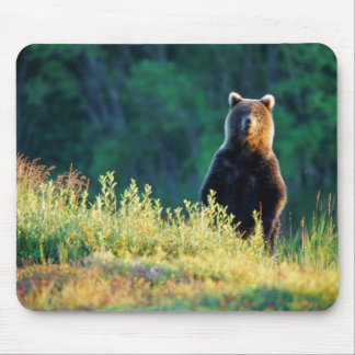 Russia, Kamchatka, grizzly of Kroska Mouse Mat