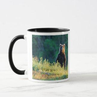 Russia, Kamchatka, grizzly of Kroska Mug