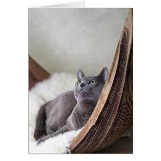 Russian Blue Greeting Card