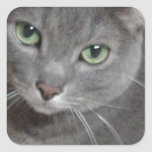Russian Blue Grey Cat Square Stickers