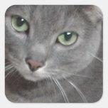 Russian Blue Grey Cat Stickers