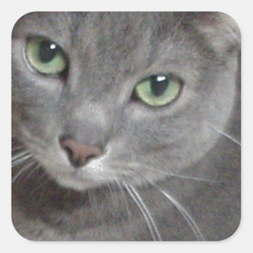 Russian Blue Cat Illinois