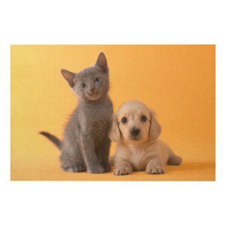 Russian Blue Kitten And Dachshund Puppy Wood Wall Decor