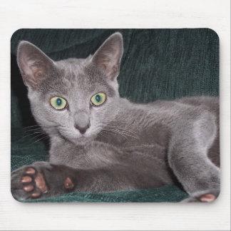 Russian Blue Kitten Mousepad
