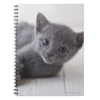 Russian Blue Kitten Notebooks