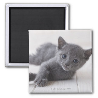 Russian Blue Kitten Square Magnet