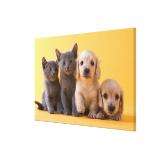 Russian Blue Kittens And Dachshund Puppies Canvas Print
