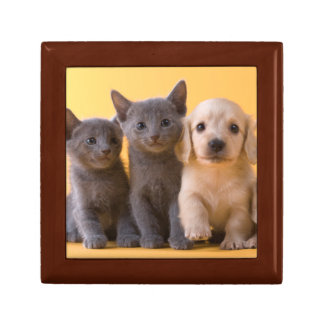 Russian Blue Kittens And Dachshund Puppies Gift Box