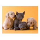 Russian Blue Kittens & Dachshund Puppies Postcard