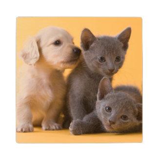Russian Blue Kittens & Dachshund Puppies Wood Coaster