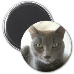 Russian Blue Mix 6 Cm Round Magnet