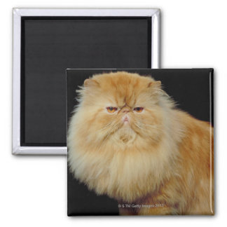 Russian Long Hair Cat Magnet