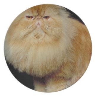 Russian Long Hair Cat Plate