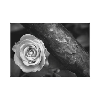 Rust and Rose Canvas Print