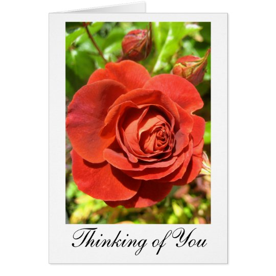 'Rust Red Rose' Greeting Card:  'Thinking of You' Card