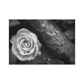 Rust & Rose Canvas Print