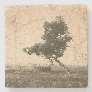 Rustic beige textured tree on farm photograph stone coaster