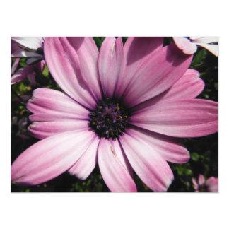 rustic bright vibrant beauty purple large photo print
