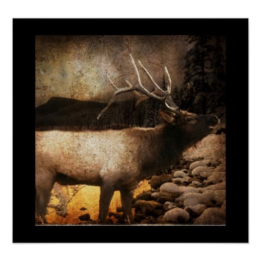 Rustic cabin cottage forest mountain bull elk poster