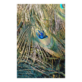 Rustic Color Peafowl Feathers Stationery