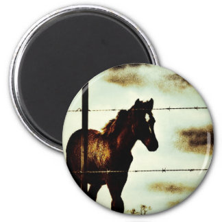 Rustic Horse Colt Foal and Barbed Wire 6 Cm Round Magnet