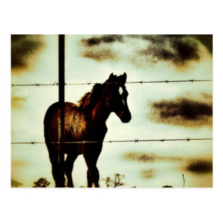 Rustic Horse Colt Foal and Barbed Wire Postcard