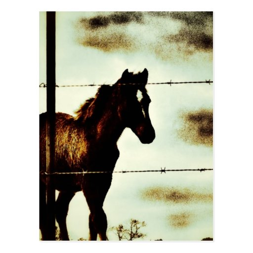 Rustic Horse Colt Foal and Barbed Wire Postcards