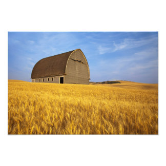Rustic old barn in mature wheat field in the 2 photo print