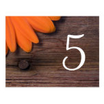 Rustic Orange Daisy Country Wedding Table Number Postcard