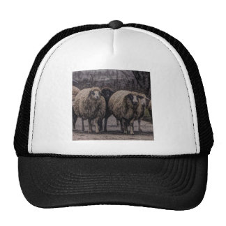 Rustic sheep on road hat