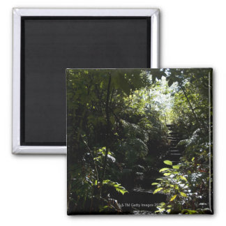 Rustic staircase/footpath in forest, sunlight square magnet