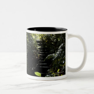 Rustic staircase/footpath in forest, sunlight Two-Tone coffee mug