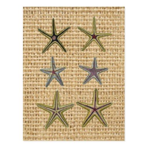 rustic starfish design on burlap background postcards