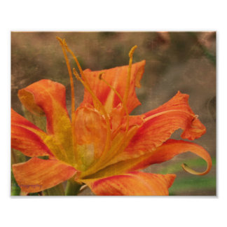 Rustic Tiger Lily Flower Photo Print