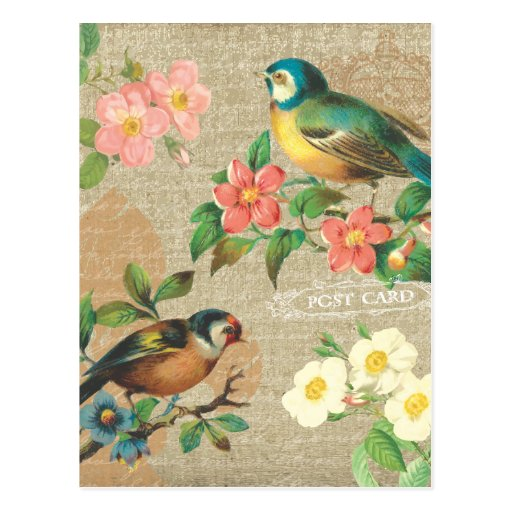 Rustic Vintage Birds and Flowers Shabby Elegance Postcard