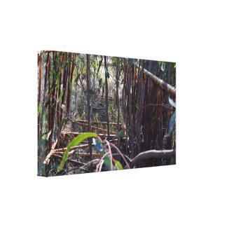 Rustic Vintage Foot Bridge Through Gum Trees, Canvas Print