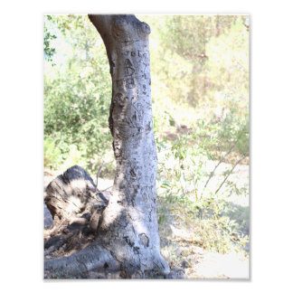 Rustic Woodland Tree - Photography Print Photo Art
